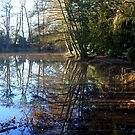 Reflections in Winter by John Dalkin