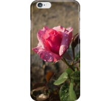 Spring Glow In Pink - a Sweetheart Rosebud With Dewdrops iPhone Case/Skin