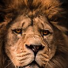 Barbary Lion by rosepetal2012