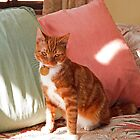 Sir Winston Churchills home Chartwell has a new cat Jock VI by Keith Larby