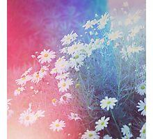Daisy Haze Photographic Print