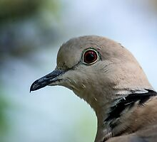 311 dove by pcfyi