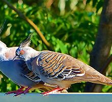 Pigeon Pair by InspiredEye
