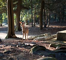 deer in the woods by photoeverywhere