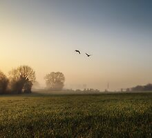 Geese at Dawn by Tobias King