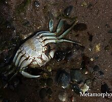 Dead Crab by MetamorphosisRS