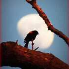 Waxing Moon and RedWinged Blackbird by TrendleEllwood