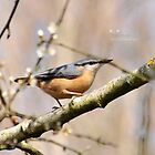 """ The Nuthatch "" by Richard Couchman"