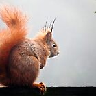 Red Squirrel. by imagic