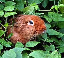 Thrianta Rabbit by Diana Gunning