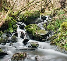 Small Stream by Andy McDonald