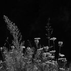 2013 - flora by moyo