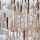 Cattails in snow by Laurie Minor