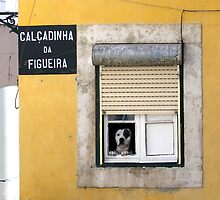 Alfama Dog In Window - Calcadinha Da Figueira  by Menega  Sabidussi