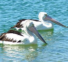 Pelicans at the Gold Coast Broadwater  by Virginia  McGowan