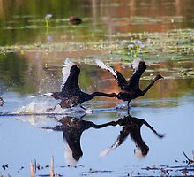 Get Off My Pond by byronbackyard