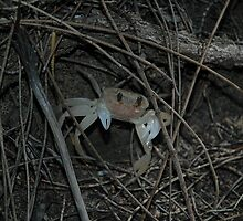 Crab, Royal National Park, Australia 2007 by muz2142