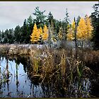 Cattails and Larches Mindscape by Wayne King