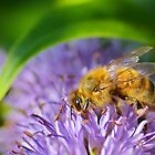 Bee on  Buddleia  by relayer51