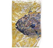 Gyotaku - Triggerfish - Oldwench -  Diptych 1  Poster