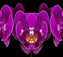 Symmetric Orchids by Mary Ann  Lewis