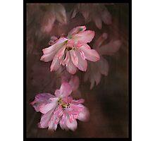 Pink Prose Photographic Print