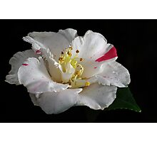 A dash of raspberry Photographic Print