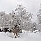 Winter 3/14/14 #3 by Carolyn Clark