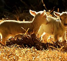 Spring Siblings  by larry flewers