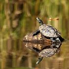 Sun Worshiper - Map Turtle by Debbie Oppermann