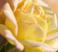 Romance the Rose by Joy Watson