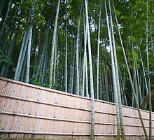 bamboo fence by photoeverywhere
