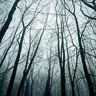the spooky forest by ArthakkerHDR