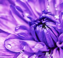 Purple Abstract Flower by MMPhotographyUK