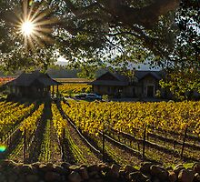 Napa Valley. Panorama by Jesus Diaz
