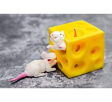 Mice and Cheese Photographic Print