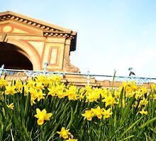 Alexandra Palace Daffodils 3 by Jessica Reilly