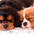 Sleeping Buddies Cavalier King Charles Spaniels by daphsam