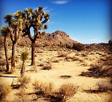 Joshua Trees  by Roger Passman