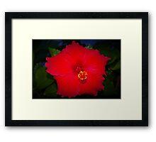 Pentagonal hibiscus Framed Print