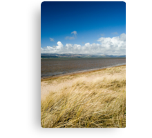 Dune grass at Askam in Furness Canvas Print