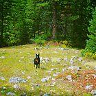 Forest Koda by Jesse Diaz