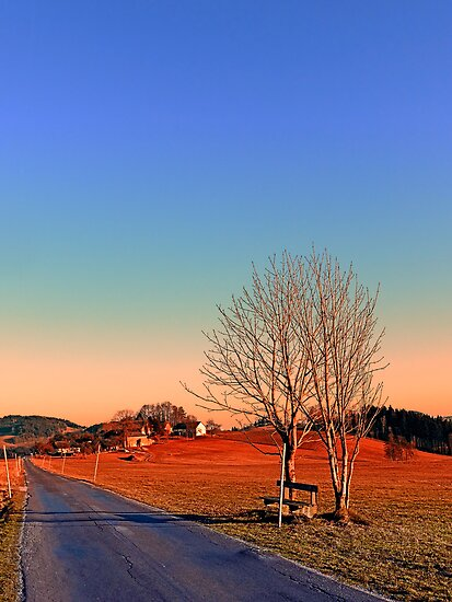 Country road, trees, a bench and a sundown | landscape photography by Patrick Jobst