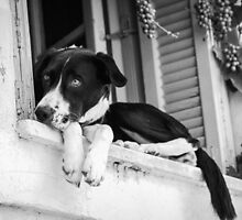 Dog in the window by elgreko