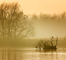 Stodmarsh by Ian Hufton