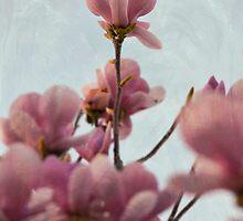 Spring by rentedochan