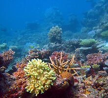 Coral growing on a reef by photoeverywhere