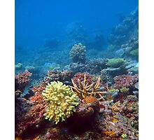 Coral growing on a reef Photographic Print