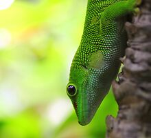 Lizard In A Tree by jimrac