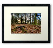 Stump in the woods Framed Print